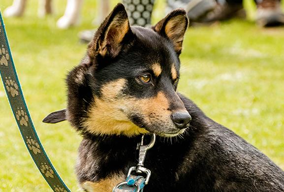 Gedragstherapie honden