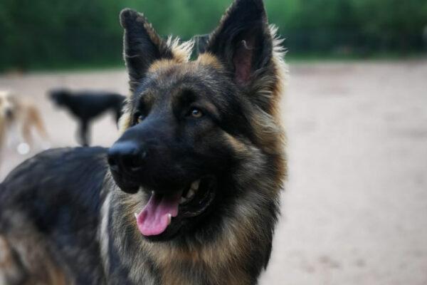 Lichaamstaal van de hond