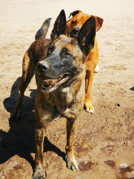 Brave Hond training