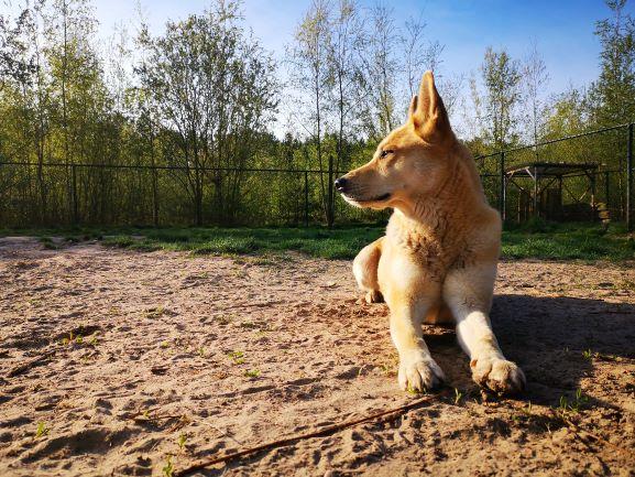 Brave hond 2