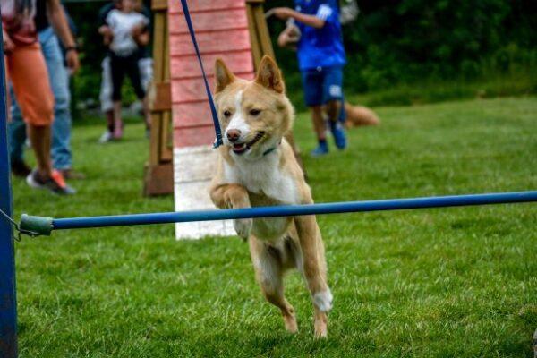 Brave hond 4 fun